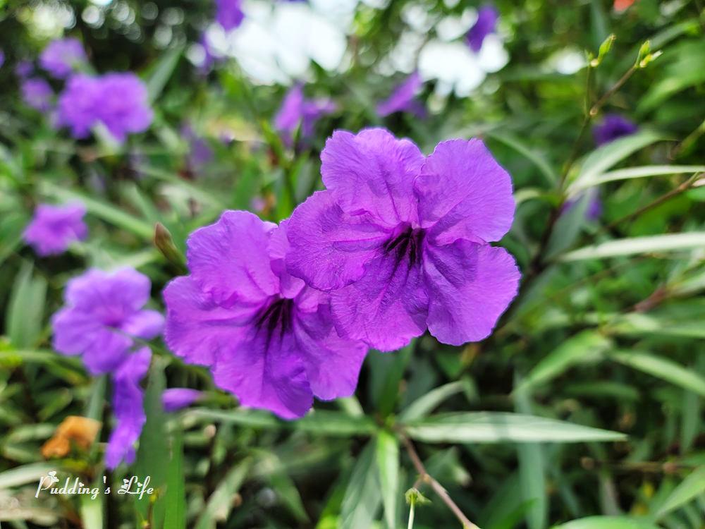 知高圳步道-花