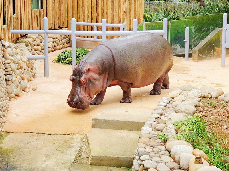 新竹動物園032