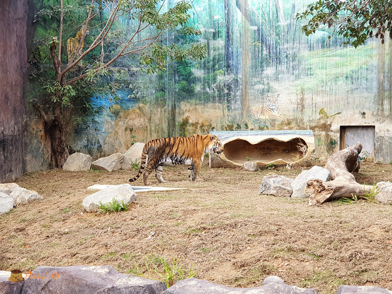 新竹動物園0018