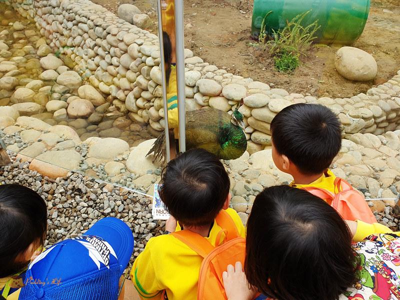 新竹動物園0043