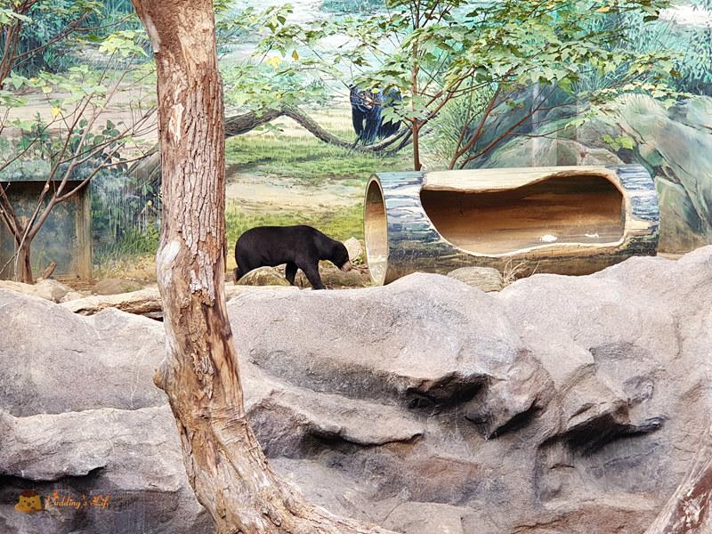 新竹動物園0022