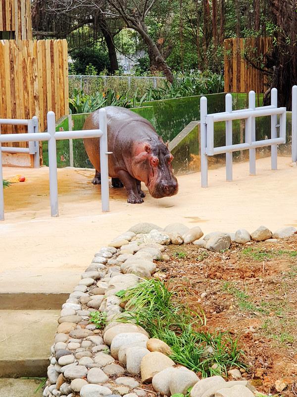 新竹動物園030