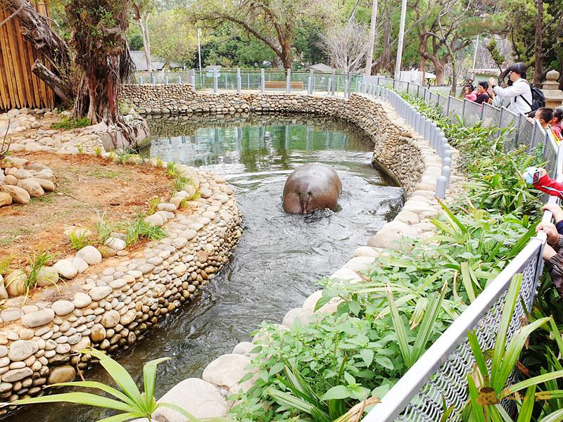 新竹動物園033