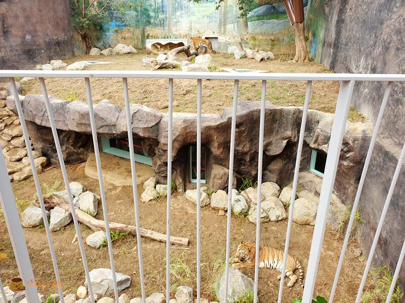 新竹動物園0020