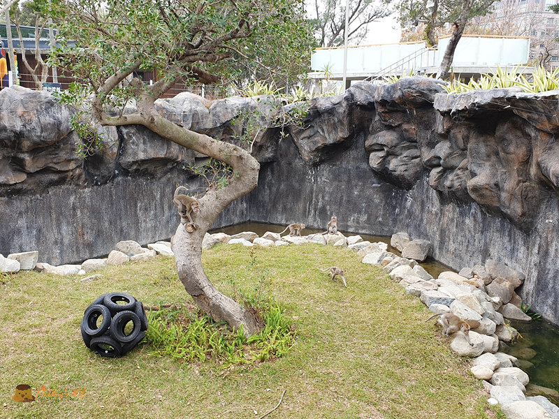 新竹動物園0025