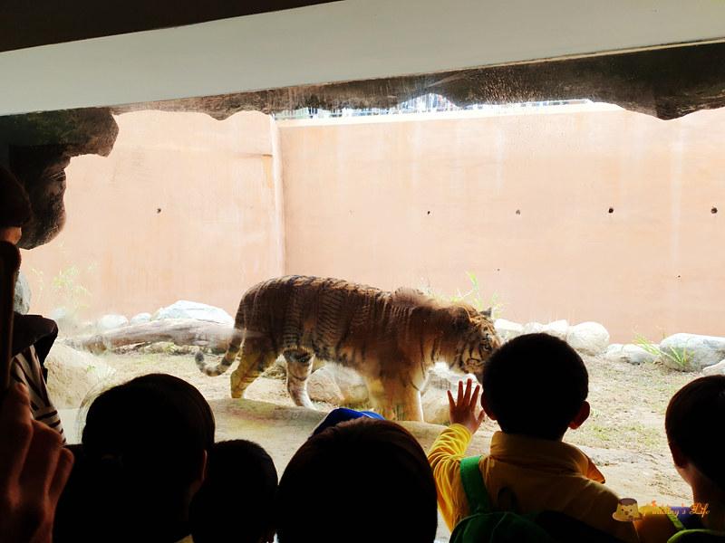 新竹動物園044