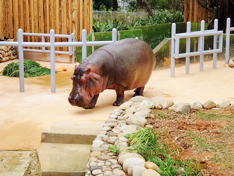 新竹動物園031