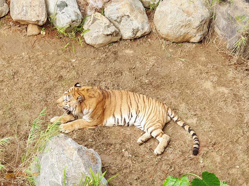 新竹動物園0019