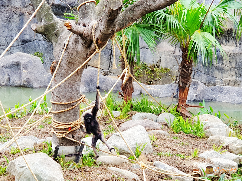 新竹動物園027