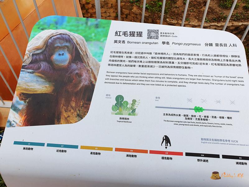 新竹動物園023