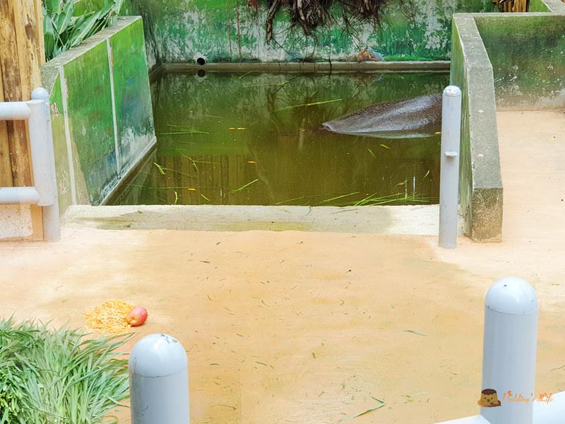 新竹動物園029