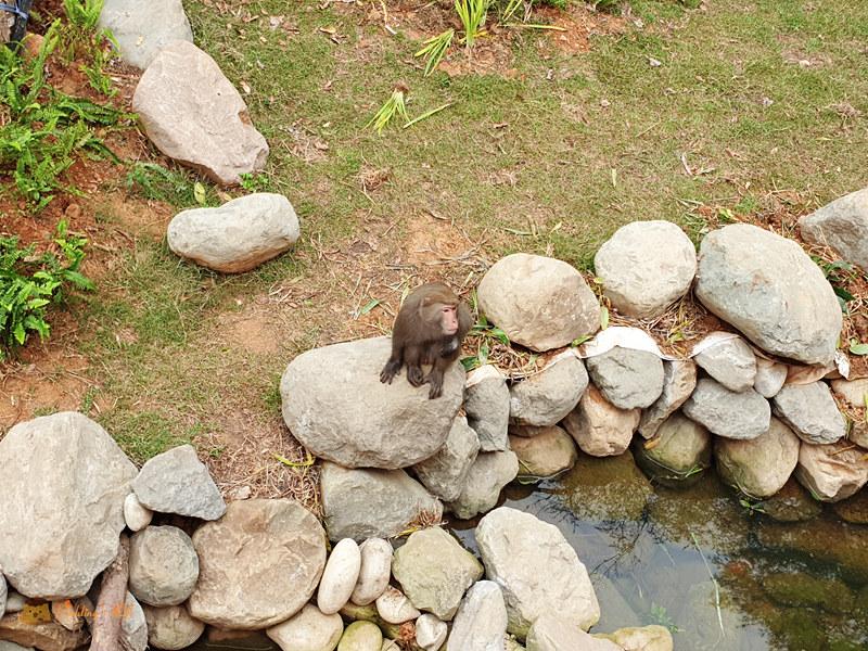 新竹動物園0028