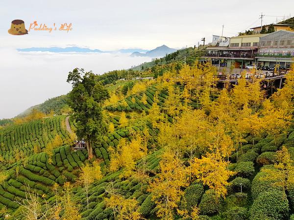 【南投旅遊】鹿谷-雲海之上金色茶園《銀杏森林》野菜火鍋景觀餐廳