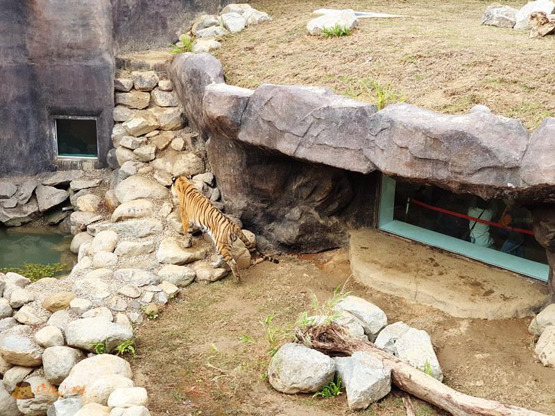 新竹動物園0017