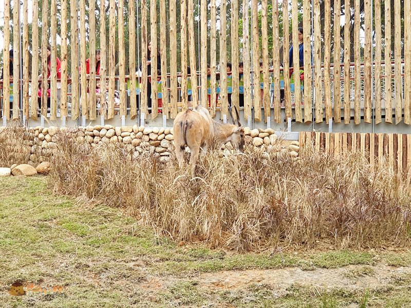 新竹動物園0035