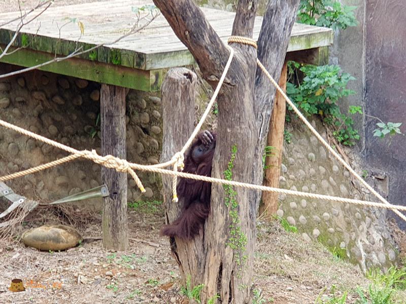 新竹動物園0024