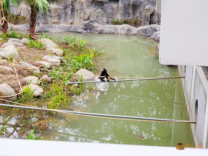 新竹動物園026