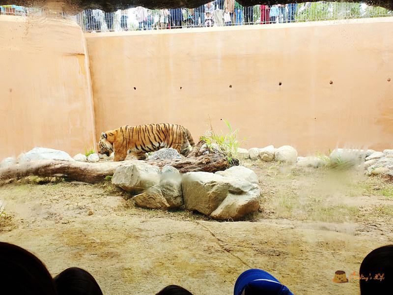 新竹動物園045