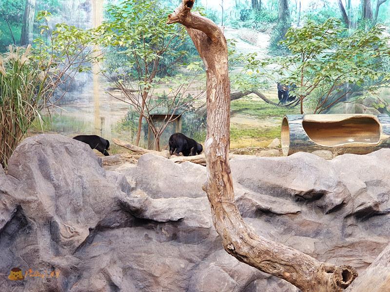 新竹動物園0021